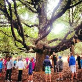 Camp Venue-Hekpoort 2-Old Oak Tree
